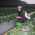 大湖採草莓(98 1/19)