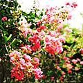 2010.07.26-板橋農村公園&石雕公園