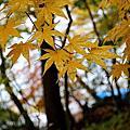 2013日本行10/24~27日光part 1