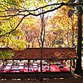 2008.11.29京都高雄