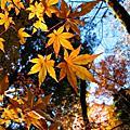 2008.11.30京都大原野