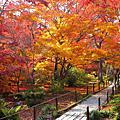 2008.12.2京都嵐山