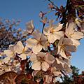 2010.4.3京都春爛漫