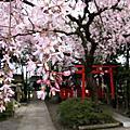 2010.4.5-1京都春爛漫