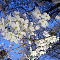 2010.4.5-2京都春爛漫