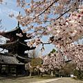 2010.4.6-1京都春爛漫