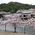 2010.4.7-2京都春爛漫