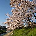 2010.4.8-2京都春爛漫