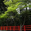 2010.4.9京都春爛漫