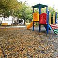 遊山玩水(中台灣)-詩意篇篇的黃葉地毯