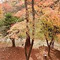 日本京都-107年12月京都賞楓紅-北野天滿宮、永觀堂