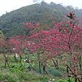 2009.02.14宜蘭櫻悅+梅花湖