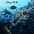 綠蠵龜潛水