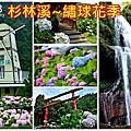 2018杉林溪繡球花