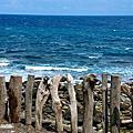東海岸~加路蘭,富山護魚區,金樽