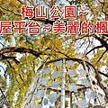 嘉義梅山~梅山公園賞梅花