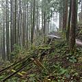 2008.02.10 太平山