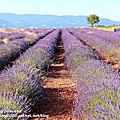 Provence普羅旺斯