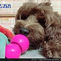 益智玩具球-櫻花粉雙球