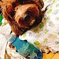 PANTO 寵物消臭除菌液