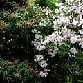Penang in springtime