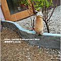 圖文漫畫:為了吃兔兔也可以爬上樹