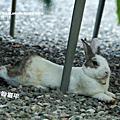 兔趴解析慢動作