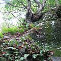 0522綠水文山步道