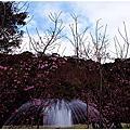 2012陽明山花季
