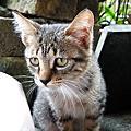 20101128猴硐貓村
