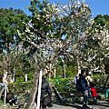 1030119花卉試驗中心茶花展