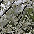 攝影作品-花花草草
