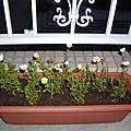 我的小花和草苺