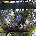 紫藤花和青汁蛋榚