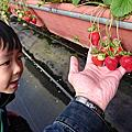 '17 1230 關西採草莓 玩沙