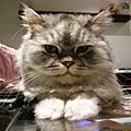 '10 1月的貓咪