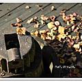 打開摩里沙卡的時光寶盒(一)-花蓮林田山漫遊園區