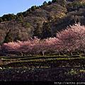 20140218-武陵農場