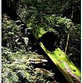 20060730-達觀山自然保護區