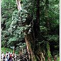 20080712-達觀山自然保護區 part 2