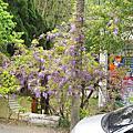 2016-04-05嘉義梅山鄉瑞里紫藤花季