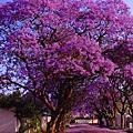 南非生活記趣