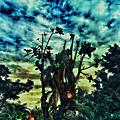 Guesser in dreamland《Native原生-植物系》