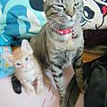 貓咪三合一
