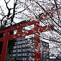 沒有櫻花的春天京都 Day2