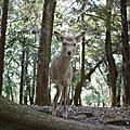 奈良被鹿追 Day5
