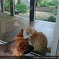 貓貓檔 Cats