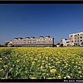 2009~ 新竹油菜花