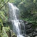 雲森瀑布鐵角蕨