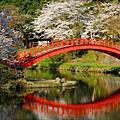 瞧一瞧日本東北的櫻花~